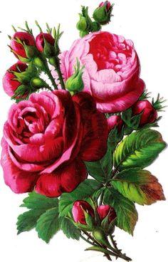 Oblaten Glanzbild scrap die cut chromo  Rose 13cm Blume flower