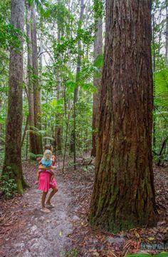 Visit the world's largest sand island - Fraser Island, Queensland, Australia