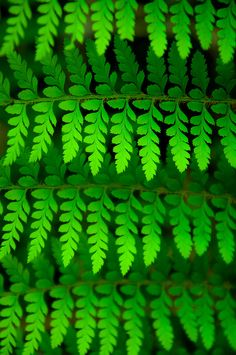 'The Forest' Green Leaves, Plant Leaves, World Of Color, Color Of Life, Go Green, Green Colors, Bright Green, Patterns In Nature, Textures Patterns