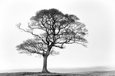 Made to Measure Fine Art. Photographer: Matthew Hart  Title: Tree  Description: Winter Tree in black and white with mist on the hills.
