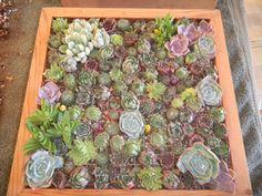 Cadres pour jardins verticaux