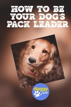 How to Use Pack Leader Dog Training Without Being a Dog Bully Want to know how to get your dog to listen and obey? Try these dog training tips on becoming the pack leader. Dachshund Funny, Dog Minding, Easiest Dogs To Train, Aggressive Dog, Dog Training Tips, Potty Training, Dog Behavior, Doge, I Love Dogs