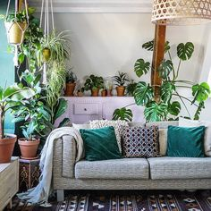 Midweek bliss: an evening on the couch surrounded by  and tomorrow we'll feel rejuvenated! ✨ :@ihavethisthingforinterior #urbanjunglebloggers