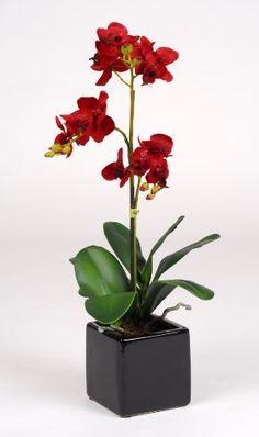 "Artificial 17"" Mini Phalaenopsis Orchid, Red by Creative Silks, http://www.amazon.com/dp/B004XCVSBG/ref=cm_sw_r_pi_dp_xh-Srb1F8FBX1"