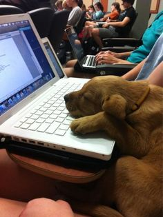 Puppy didn't want to stay at home during class?? Well at least he slept through it...