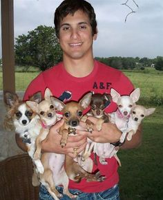 "From ""Awkward Family Pet Photos"" with the caption.""We must always strive for one more chihuahua. Animals For Kids, Cute Baby Animals, Funny Animals, Chihuahua Puppies, Cute Puppies, Teacup Chihuahua, Adorable Dogs, Pet Dogs, Pets"