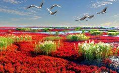 Fenômeno da Praia vermelha  - Panjin -  China