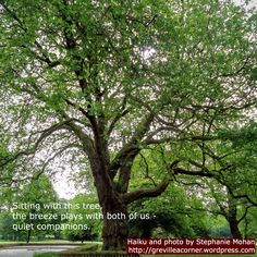 Sitting with this tree, the breeze plays with both of us - quiet companions. Haiku and photo for meditation and reflection by Stephanie Mohan - August 2015