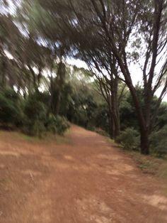 """@Giovanni Sedda: """"Niente di meglio dei pini che incorniciano il paesaggio e regalano ossigeno :) #scattidicorsa"""""""