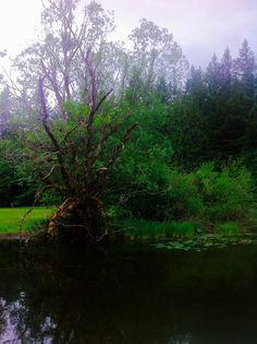 Silver Lake Washington