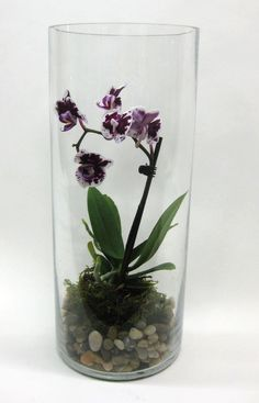 Miniature orchid terrarium in a glass cylinder.