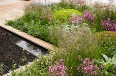 Brewin Dolphin Garden RHS Chelsea Flower Show 2013. Click to read article and to see plants list used.