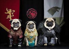 6. Perros de juego de tronos