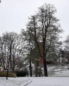 #sdo #alppikatu #lähihoitajaopiskelija #snow #helsinki #finland Helsinki, Finland, Snow, Photography, Outdoor, Instagram, Outdoors, Photograph, Fotografie