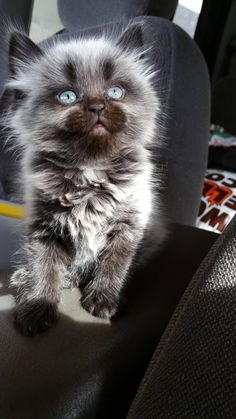 Not a cat person but I just couldn't not take her home. - Imgur