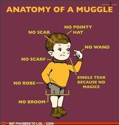 anatomy of a muggle