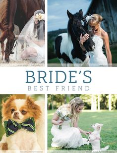 View more from this collection of furry animals at Nashville weddings! | The Pink Bride® www.thepinkbride.com