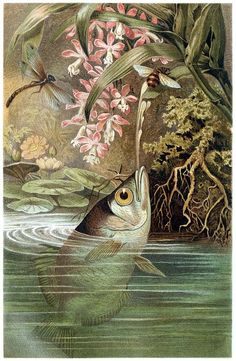 Archerfish (Toxotidae)    From Brehms Tierleben (Brehm's animal life) vol. 8, under the direction of Alfred Edmund Brehm, Leipzig & Vienna, 1900.    (Source: archive.org)