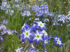 Michael Jackson Rare, Wild Flowers, Flora, Chile, Garden Ideas, Gardens, Planters, Plants, Bonito