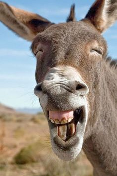 Donkey With Big Smiling Funny Face Image. Donkey With BMW Logo Funny Picture For Whatsapp. Donkey With Closeup Face Funny Image. Funny Animal Images, Animals Images, Cute Funny Animals, Cute Baby Animals, Funny Cute, Funny Images, Hilarious Photos, Funny Pictures, Funny Dogs