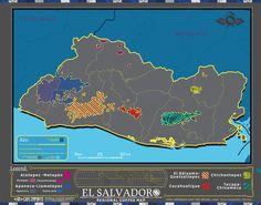 Cafe Imports   El Salvador