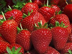 Tips To Grow A Ton Of Organic Strawberries - http://www.ecosnippets.com/gardening/tips-to-grow-a-ton-of-organic-strawberries/