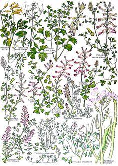 Británicas plantas y flores amarillo por mysunshinevintage en Etsy