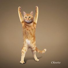 Yoga Kitty | Stretching Kittens: Yoga Cats Calendar 2010 : Cute Babies