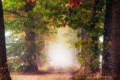 Fall Colors - Better on Black...click or press M Follow me on Instagram https://www.instagram.com/larsvandegoor/