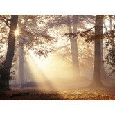 Hmm....  family room or living room Found it at Wayfair - Graham and Brown Metallic Forest Photographic Print