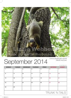 Azimuth Print has recently printed a wall calendar with Lizzie Webber's amazing wildlife photos. Buy this calendar to support elephant behaviour research hosted with the Uda Walawe Elephant Research Project in Sri Lanka. If you would like your pictures printed to form a calendar see our webpage. http://www.azimuthprint.co.uk/printing/wall-calendars/ #WallCalendar #CalendarPrinting #Printing #Calendar