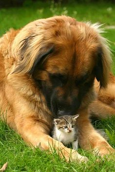 Animaux Tendresse