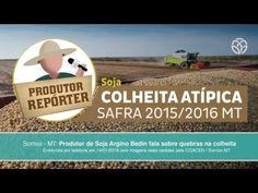 Produtor de Soja fala sobre possível quebra de safra em MT