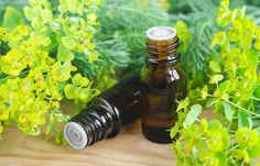 10 Effective Home Remedies To Stop Nose Bleeding, A bleeding nose can be scary. Fortunately, more often than not, nosebleeds are nothing to panic about. The sight of blood dripping down the nose can send peo, Essential Oils For Vertigo, Yl Essential Oils, Cypress Oil, Cypress Essential Oil, Stop Nose Bleeds, Tingling Hands, Nettle Leaf Tea, Numbness In Hands, Parts Of The Nose