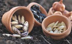 C'est la période idéale pour commencer à produire vos propres graines pour l'année prochaine… Découvrez pourquoi et comment s'y mettre. Alors ça vous tente ?
