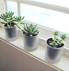 ~C~ tiny succulents on the window+frosted glade candle jars as vases | Flickr - Photo Sharing!