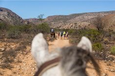 The view from between a horse's ears is said to be one of the best. Here you can see the hikers from my horse, Noodle
