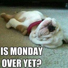 Moose Monday...