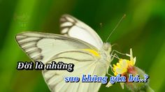 Karaoke PHẬN TƠ TẰM tnv Beat Chuẩn  TONE NAM Phối theo thần tượng BOLERO...