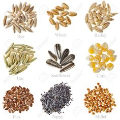 Collection Cereal Grains and Seeds Rye Wheat Barley Oat Sunflower Corn Flax Poppy Millet closeup isolated on white Seed Illustration, Banners, Corn Grain, Seed Art, Minecraft Drawings, Body Hacks, Montessori Materials, Banner Printing, The Oatmeal