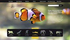 Web Design   Pairi Daiza on Behance