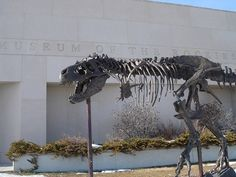 """Montana happens to be one of the world's hotspots for dinosaur digs.  Here in Bozeman is the Museum of the Rockies, where the famous paleontologist Jack Horner serves as curator.  The museum has some very nice and unique dinosaur stuff that I had never seen or heard of before."""