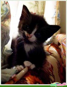 Kitty Bizkit