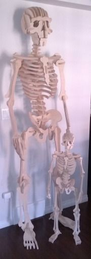 Skeleton puzzles for Halloween. One 3 foot and one 7 foot.