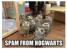 >>>Cheap Sale OFF! >>>Visit>> They're coming for us Love Harry Potter? Check out our Harry Potter Fanfiction Recommended reading lists - fanfictionrecomme. Memes Do Harry Potter, Fans D'harry Potter, Harry Potter Fandom, Harry Potter Owl, Owl Pictures, Funny Animal Pictures, Funny Photos, Funny Owls, Funny Animals