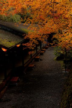 Kyoto Autumn-12-2010 by Hakuei_Photo (please critique my works), via Flickr