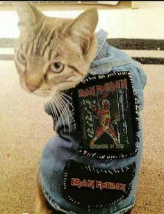 Metalhead kitties - battlevests for animals - cat battlevest - Iron Maiden I Love Cats, Cute Cats, Funny Cats, Funny Animals, Cute Animals, Iron Maiden, Crazy Cat Lady, Crazy Cats, Metalhead