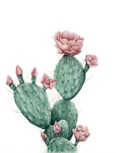 Wüstenblume - Kunstdruck, Best Picture For Cactus classroom For Your Taste You are looking for something, and it is going to tell you exactly what you are looking for, and you Cactus Drawing, Cactus Painting, Cactus Art, Cactus Flower, Cactus Plants, Garden Cactus, Indoor Cactus, Tiny Cactus, Garden Drawing