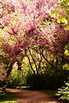 The trails throughout Capricho are bordered by flowering trees and bushes.