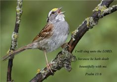 I will sing  Ps. 13:6